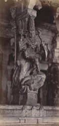 Madura. The Great Pagoda [Minakshi Sundareshvara Temple]. Carved pillar in the Thousand Pillar Portico [Airakkal Mandapa] 212216